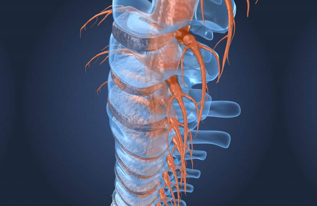 Chiropractic Care And The Nervous System