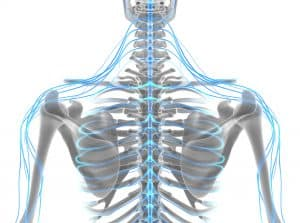Why Is It Important To Have A Healthy Nervous System?
